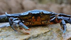 dangerous crab ;)