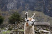 Fotogenes Lama