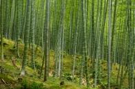 Im Umfeld Kyotos