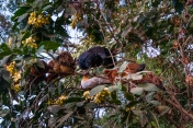 Hühner auf dem Baum