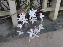 Yasmin Flowers =)