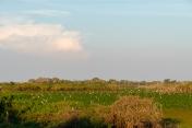 Pantanal swamps